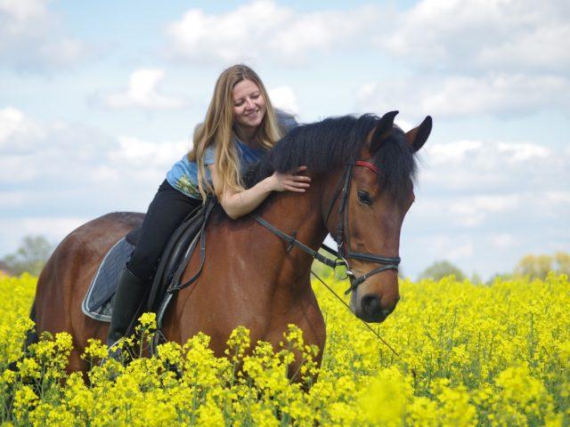 pferde-reiten-mensch